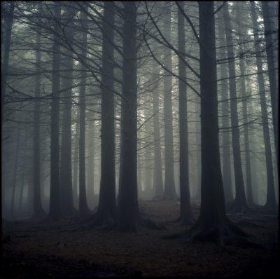 Bilde 09 Dark Forest Landscape